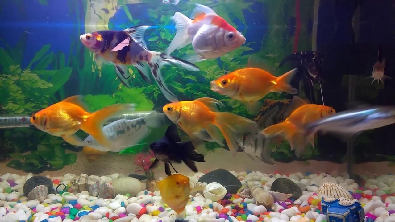 entretien des aquariums
